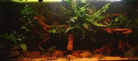 l forum hilfe 1 mein zuk nftiges aquarium. Black Bedroom Furniture Sets. Home Design Ideas