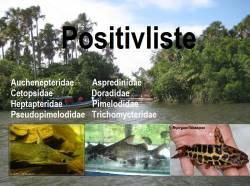Positivliste_2.jpg